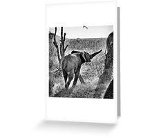 """Toroo"" (B&W) Greeting Card"