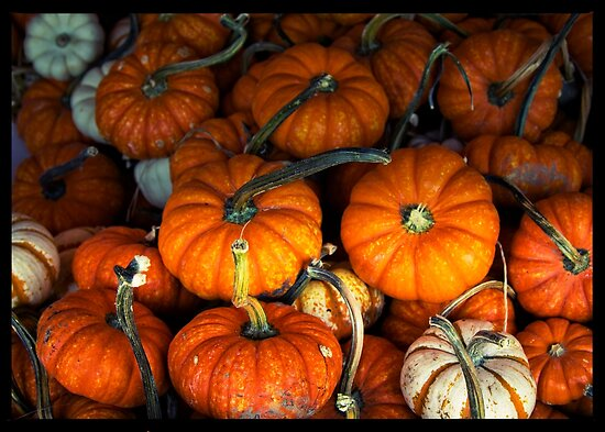 Pumpkins, pumpkins everywhere by KSKphotography