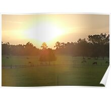Grazing Sunrise Poster