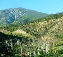 San Bernadino Beauty by skyhat