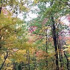Jefferson Memorial Forest IV, near Louisville, Kentucky by Richard J. Bartlett