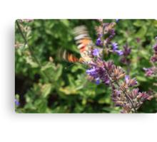 butterfly start Canvas Print