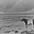 """Queen of Ngorongoro"" (B&W) by Andreas Koerner"
