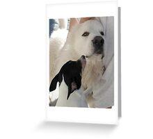 DUKE AND FRIEND Greeting Card