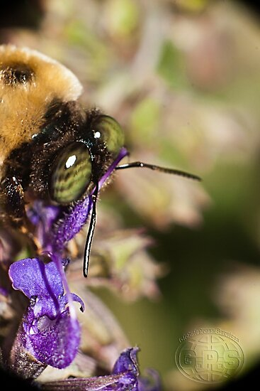 A Bee's eye view,... by daveknowshow