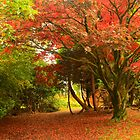 Autumn in Parkanaur by Adrian McGlynn