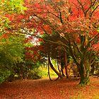 Autumn in Parkanaur by Adrian McGlynn
