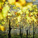 2012 - at the vineyard by moyo