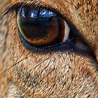 Up Close - Eye of a Deer by Heike Richter