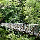 Pelorus Swingbridge by Heike Richter