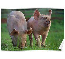 Piggie Pals Poster