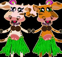 Luna and Sola, the hula-hula moo-cows. by Weber Consulting
