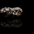 Australian Moth by Josie Jackson
