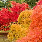 Westonbirt Autumn V by Chris Tarling