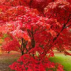 Westonbirt Autumn VII by Chris Tarling