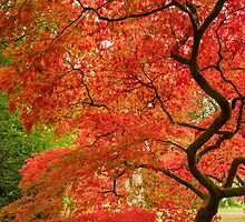 Westonbirt Autumn IX by Chris Tarling