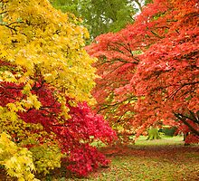 Westonbirt Autumn X by Chris Tarling