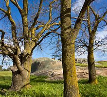 The other trees at Dog Rocks by Hans Kawitzki