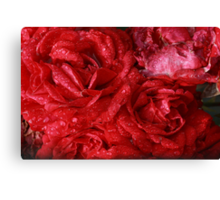 red roses after the rain Canvas Print