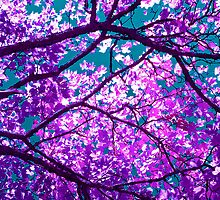 purple tree I by blackpool