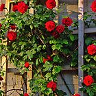 Red Roses by Joy  Rector