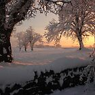 Snowy Sunrise by Adrian McGlynn