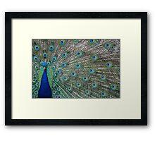 Peacock 3 of 3 Framed Print
