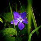 Bleu by Wintermute69