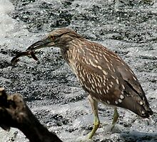 Heron: Lunch was D-eel-ightful by Ken Glotfelty
