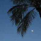 I Dream of Palm Trees by Sandra Fortier