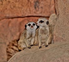 Baby Meerkats by Larry Trupp