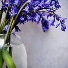 Bluebells in a vase by LittleBlueWren