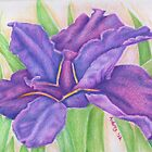 Purple Iris by FedericoArts