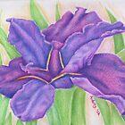 Purple Iris by FedericoArts