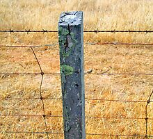 Rolling posts grow no moss by Ersu Yuceturk
