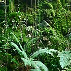 Ferns and Mosses by magicaltrails