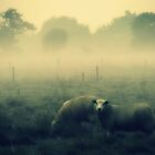 And Dream of Sheep ©  by JUSTART