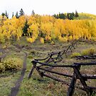 Breckenridge Gold by Chris Snyder