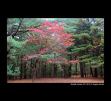 Red Tree In Pine Forest by © Sophie W. Smith