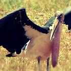 """'Kenian Marabou Stork """"aka"""" The Undertaker Bird' by Matt Jewitt"""