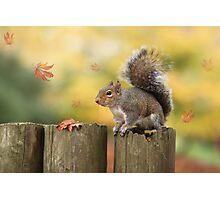Autumn squirrel Photographic Print