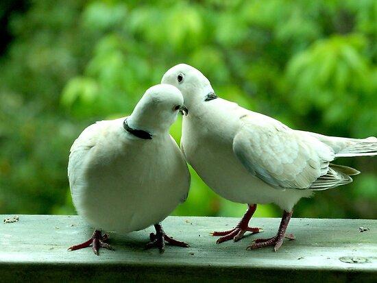True love................? by Roy  Massicks