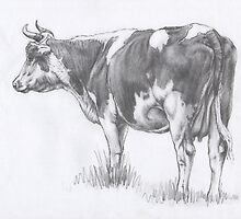 Backward Cow Sketch by Margaret Stockdale