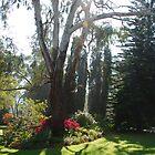 Garden sunlight 3 by Fran Woods