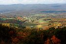 Fall in Virginia, United States by Eileen McVey