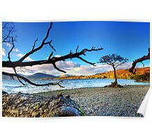 Lone  Loch Lomond Tree Poster
