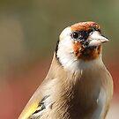 Goldfinch model  by Declan Carr