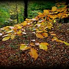 Autumn Leave's by shelleybabe2