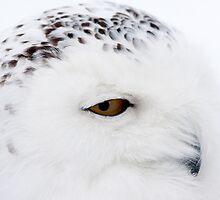 Winter Owl  by David Hannah