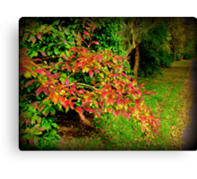 Autumn leave's Canvas Print